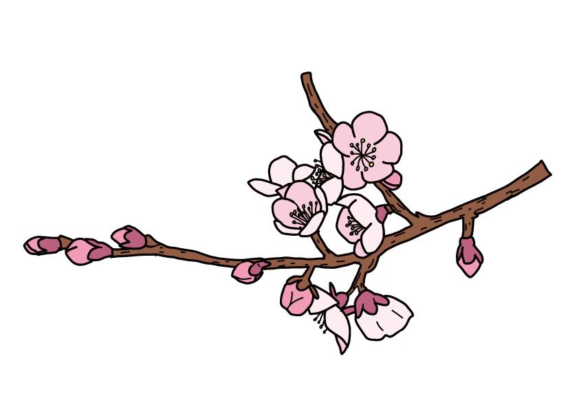 大分県の県木-ブンゴウメ