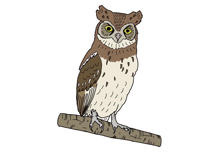 愛知県の県鳥-コノハズク