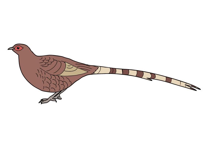 秋田県の県鳥-ヤマドリ