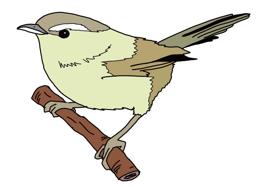 福岡県の県鳥-ウグイス