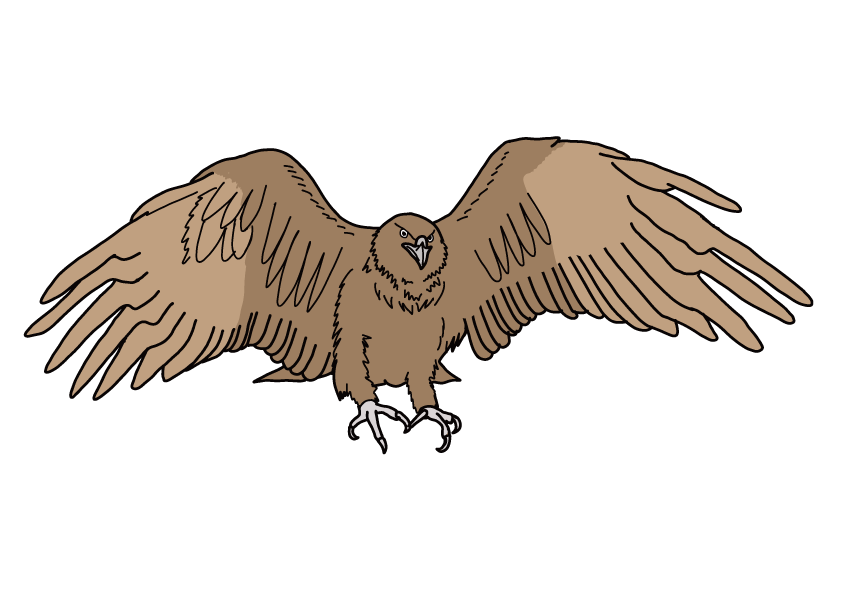 石川県の県鳥-イヌワシ