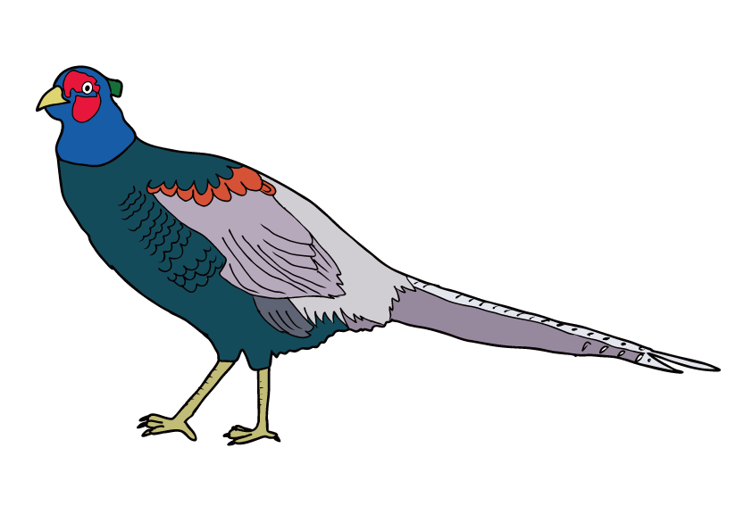 岩手県の県鳥-キジ