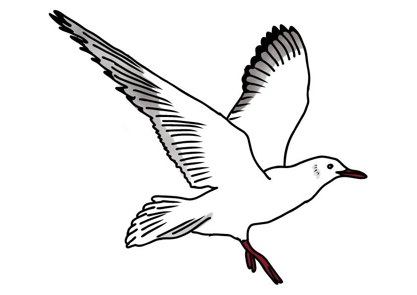 神奈川県の県鳥-カモメ