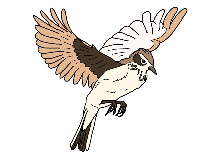 熊本県の県鳥-ヒバリ