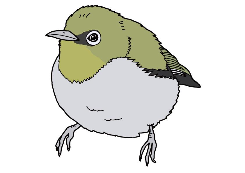 大分県の県鳥-メジロ