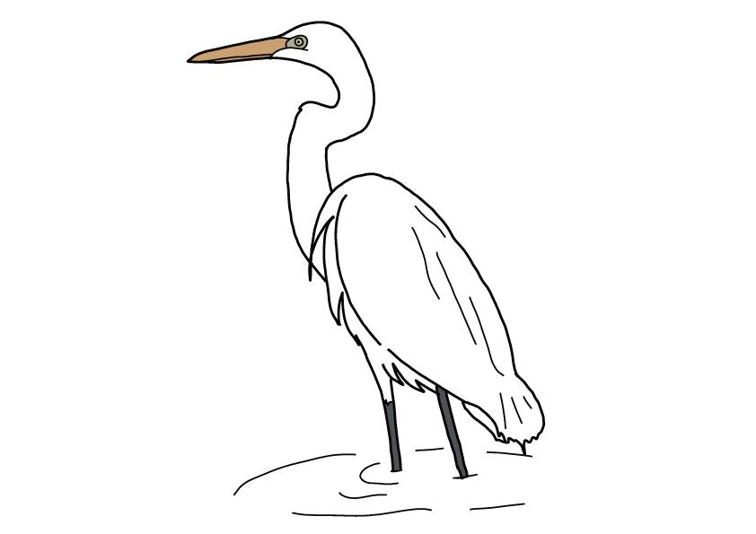 徳島県の県鳥-シラサギ