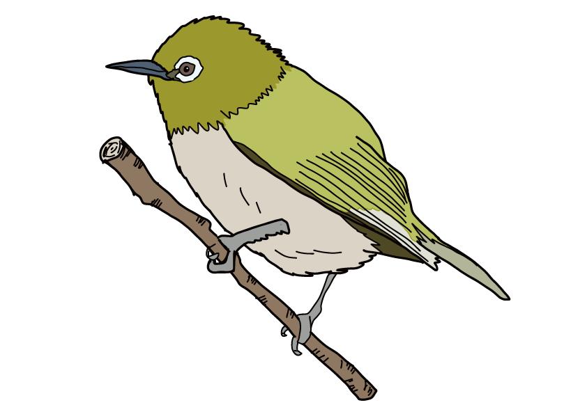和歌山県の県鳥-メジロ