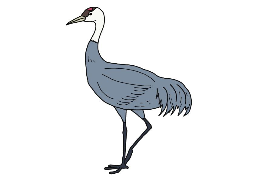 山口県の県鳥-ナベヅル