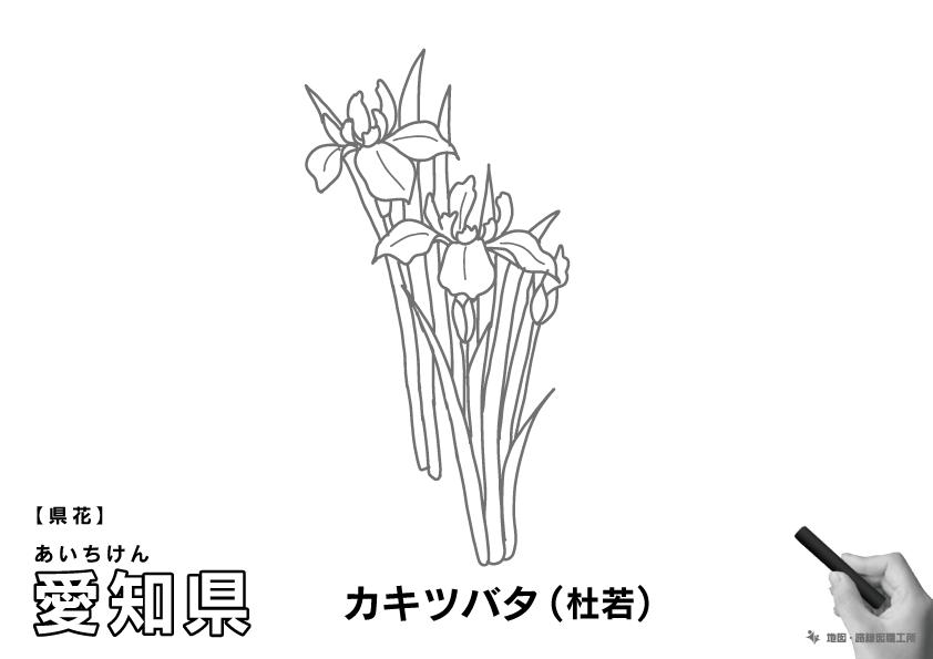 県花 愛知県 カキツバタ(杜若)のイラスト・ぬりえ