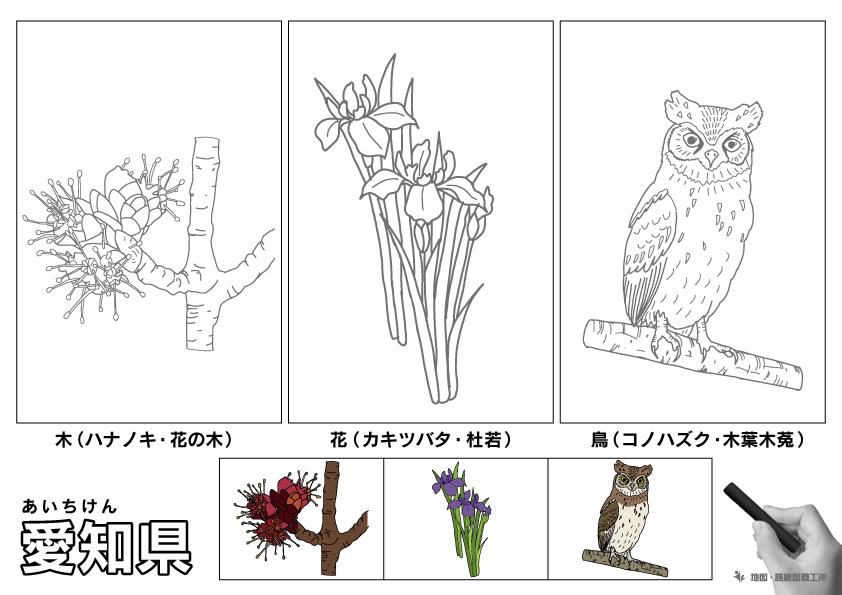愛知県 県木 県花 県鳥 のイラスト・ぬりえ