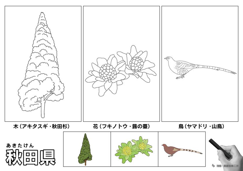 秋田県 県木 県花 県鳥 のイラスト・ぬりえ