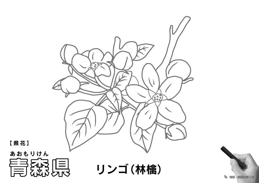 県花 青森県 リンゴ(林檎)のイラスト・ぬりえ
