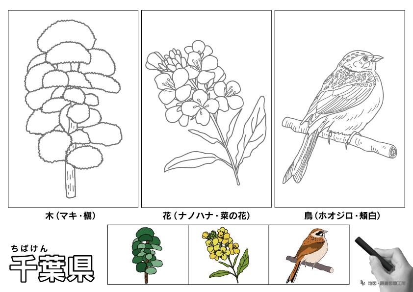 千葉県 県木 県花 県鳥 のイラスト・ぬりえ