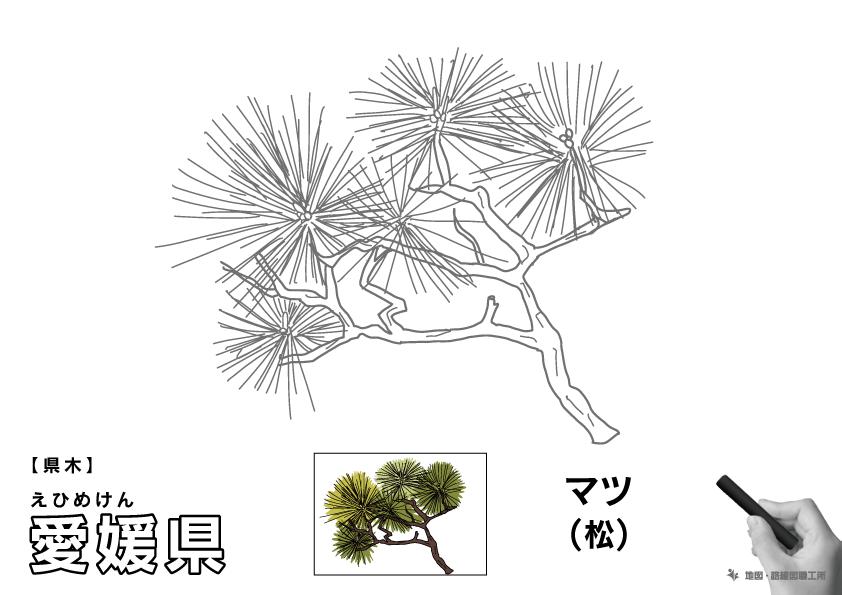 県木 愛媛県 マツ(松)のイラスト・ぬりえ
