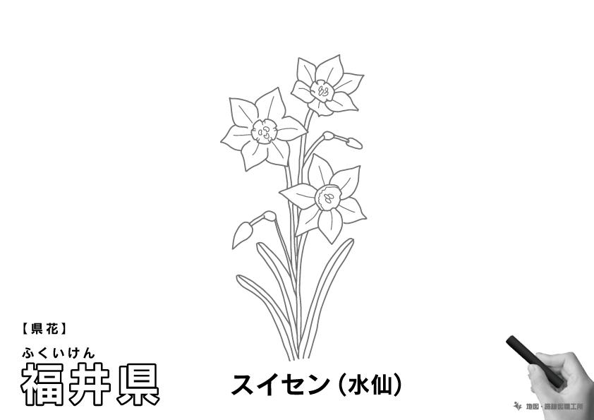 県花 福井県 スイセン(水仙)のイラスト・ぬりえ