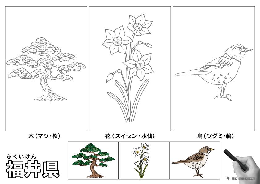 福井県 県木 県花 県鳥 のイラスト・ぬりえ