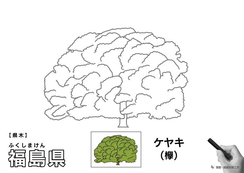県木 福島県 ケヤキ(欅)のイラスト・ぬりえ