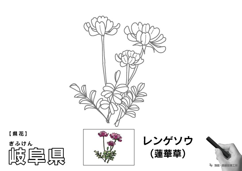 県花 岐阜県 レンゲソウ(蓮華草)のイラスト・ぬりえ