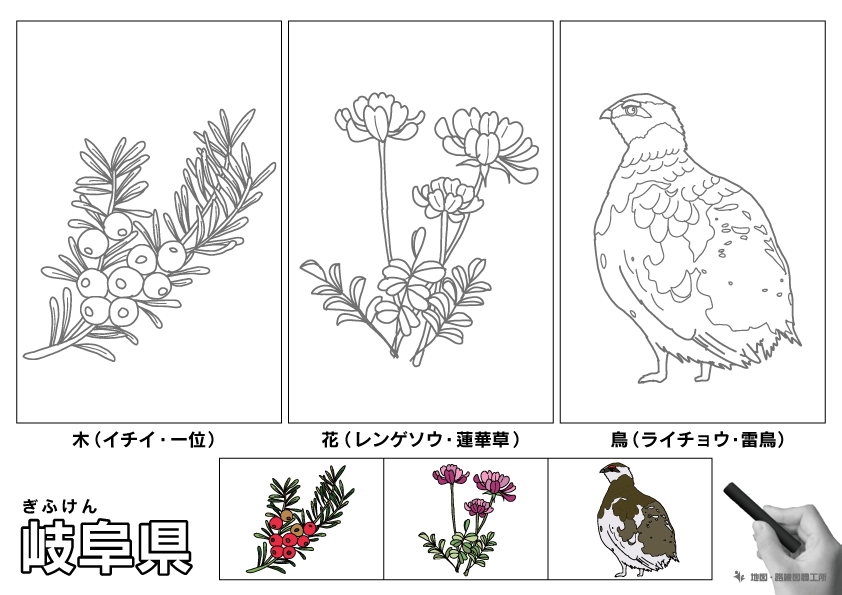 岐阜県 県木 県花 県鳥 のイラスト・ぬりえ