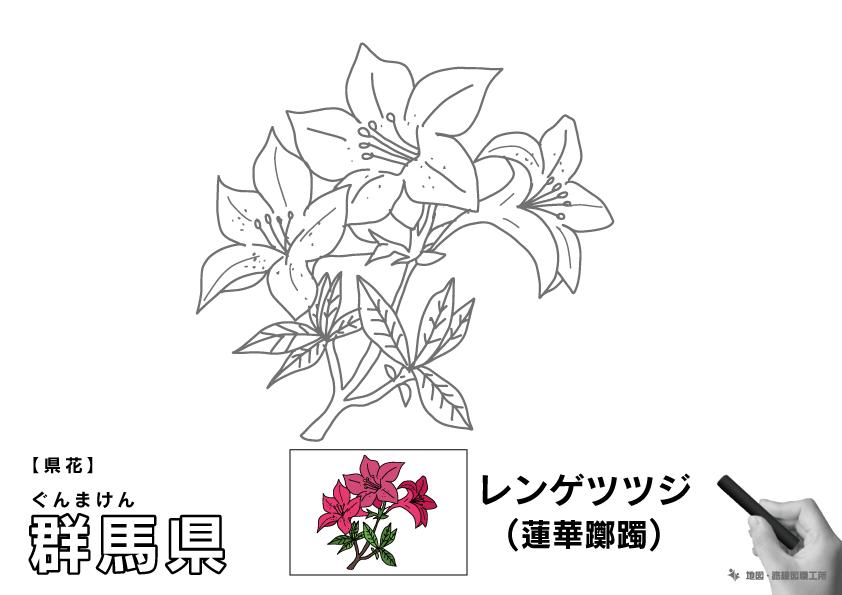 県花 群馬県 レンゲツツジ(蓮華躑躅)のイラスト・ぬりえ