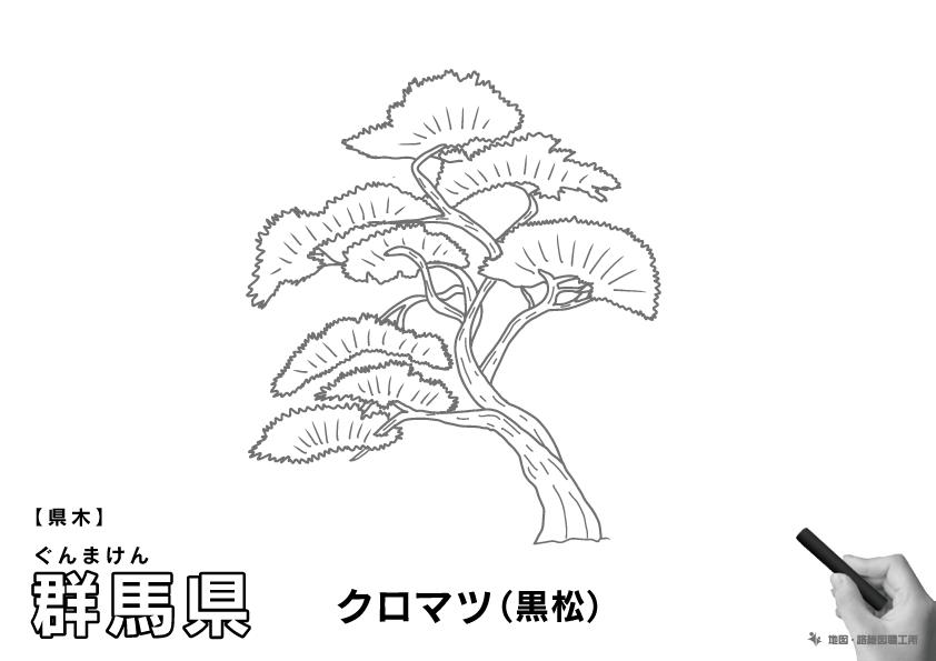 県木 群馬県 クロマツ(黒松)のイラスト・ぬりえ