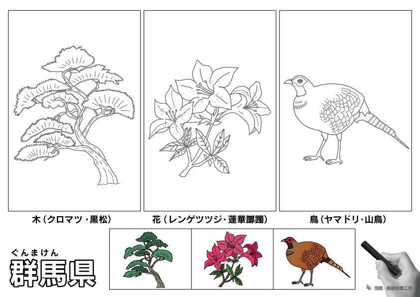 群馬県 県木 県花 県鳥 のイラスト・ぬりえ