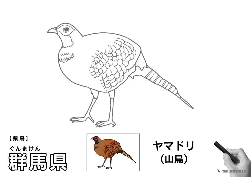 県鳥 群馬県 ヤマドリ(山鳥)のイラスト・ぬりえ