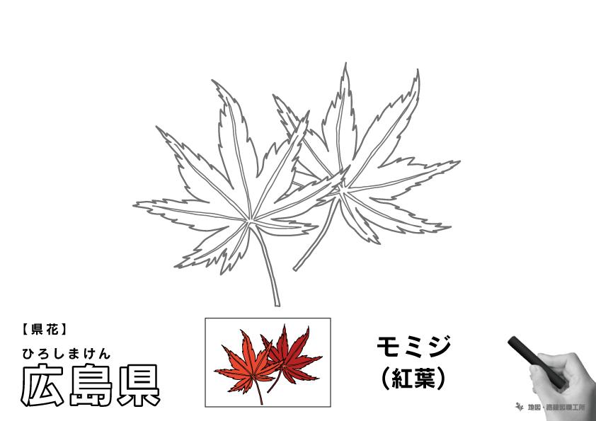 県花 広島県 モミジ(紅葉)のイラスト・ぬりえ