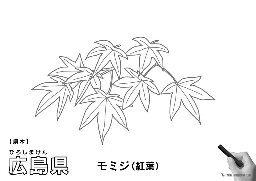 県木 広島県 モミジ(紅葉)のイラスト・ぬりえ