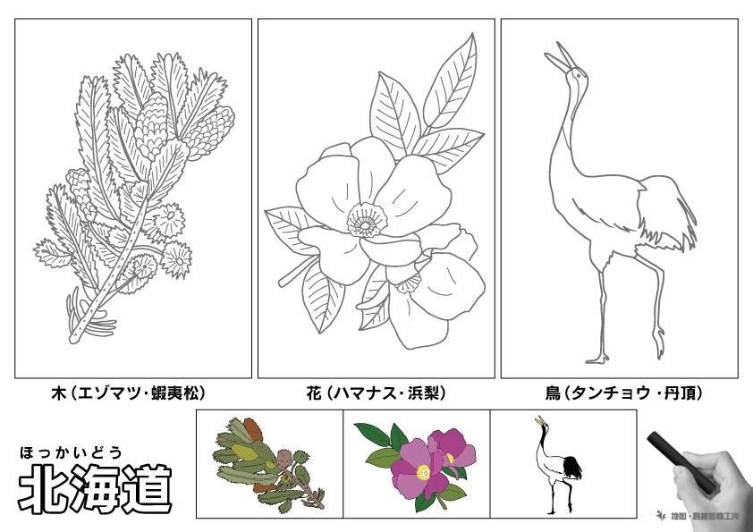 北海道 県木 県花 県鳥 のイラスト・ぬりえ