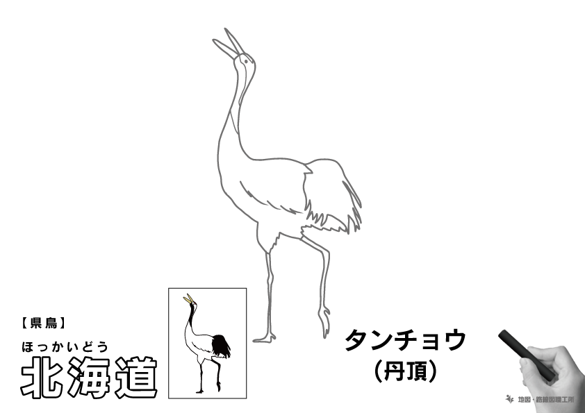県鳥 北海道 タンチョウ(丹頂)のイラスト・ぬりえ