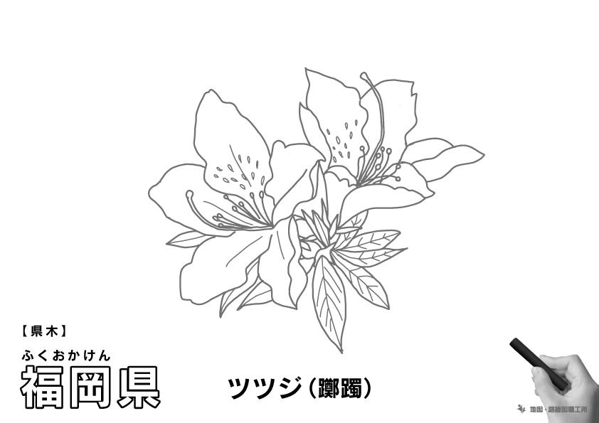 県木 福岡県 ツツジ(躑躅)のイラスト・ぬりえ