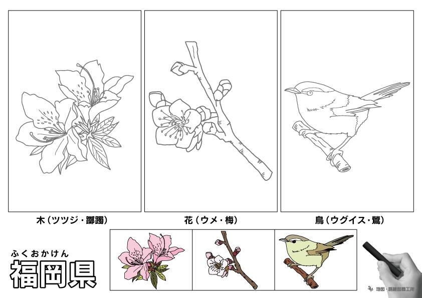 福岡県 県木 県花 県鳥 のイラスト・ぬりえ