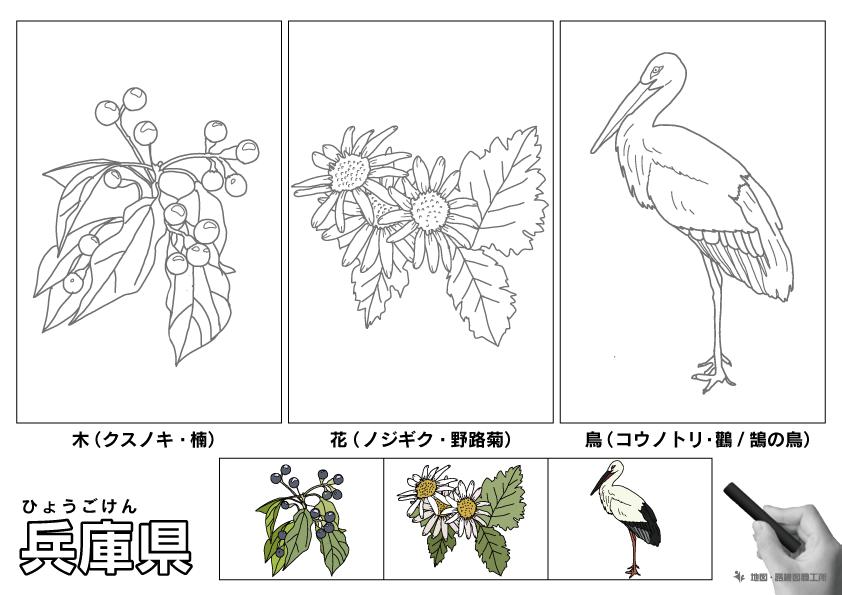 兵庫県 県木 県花 県鳥 のイラスト・ぬりえ