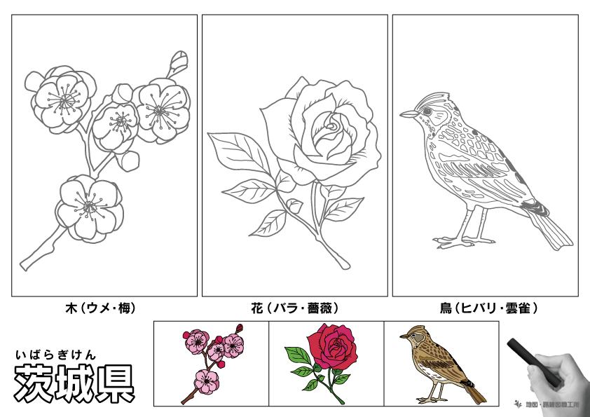 茨城県 県木 県花 県鳥 のイラスト・ぬりえ