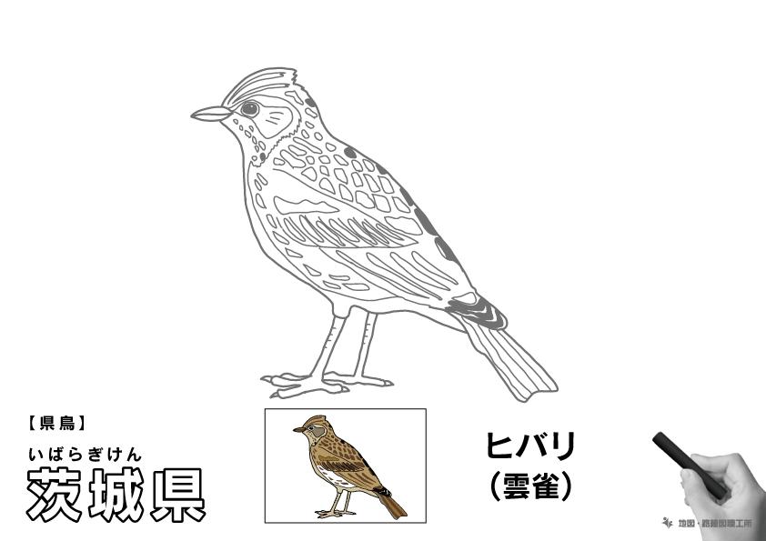 県鳥 茨城県 ヒバリ(雲雀)のイラスト・ぬりえ
