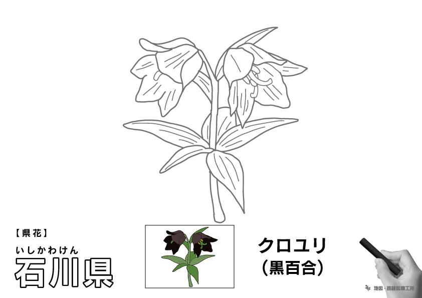 県花 石川県 クロユリ(黒百合)のイラスト・ぬりえ