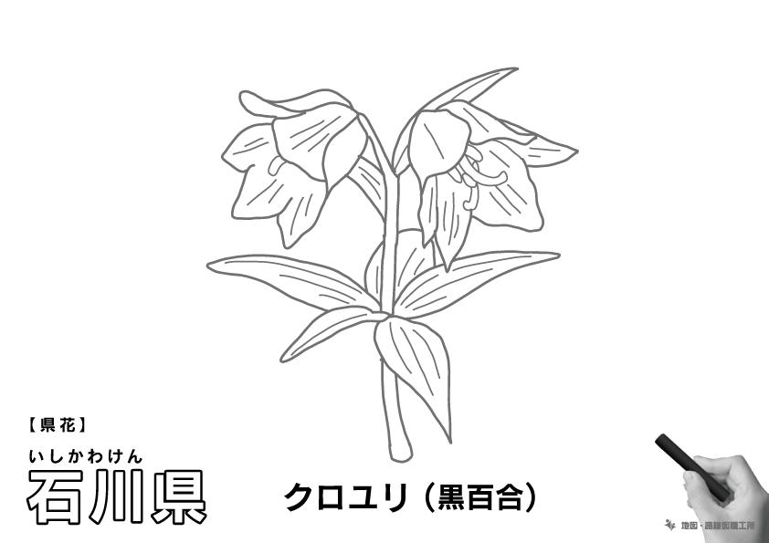 県花 井石川県 クロユリ(黒百合)のイラスト・ぬりえ