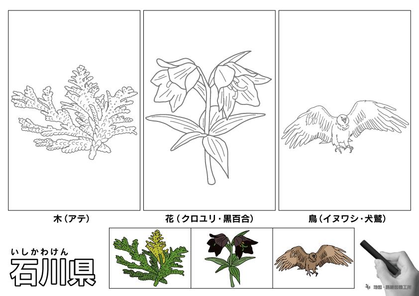 石川県 県木 県花 県鳥 のイラスト・ぬりえ