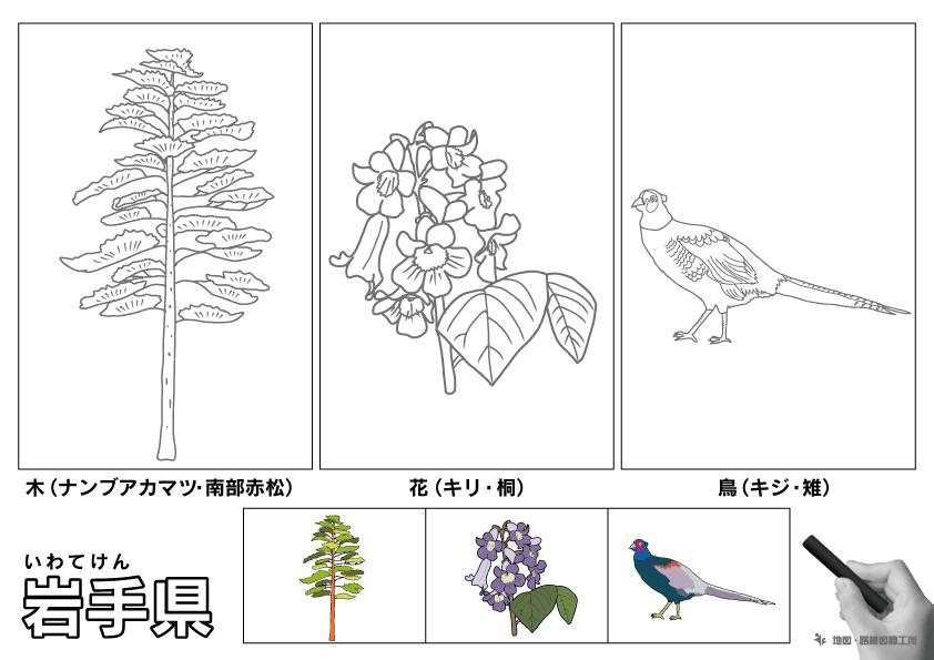 岩手県 県木 県花 県鳥 のイラスト・ぬりえ