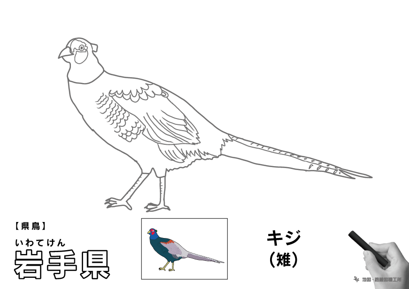 県鳥 岩手県 キジ(雉)のイラスト・ぬりえ