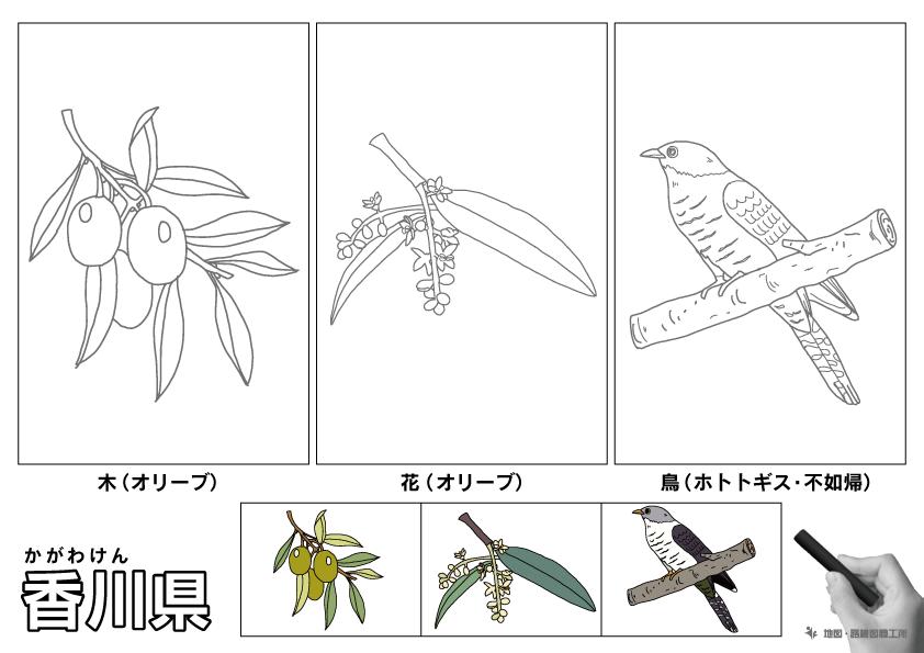香川県 県木 県花 県鳥 のイラスト・ぬりえ