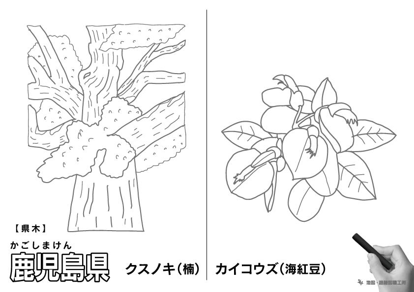 県木 鹿児島県 クスノキ(楠)・カイコウズ(海紅豆)のイラスト・ぬりえ