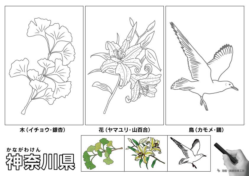 神奈川県 県木 県花 県鳥 のイラスト・ぬりえ