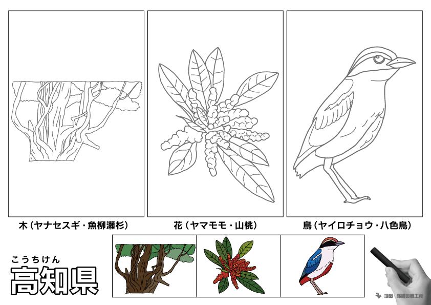 高知県 県木 県花 県鳥 のイラスト・ぬりえ