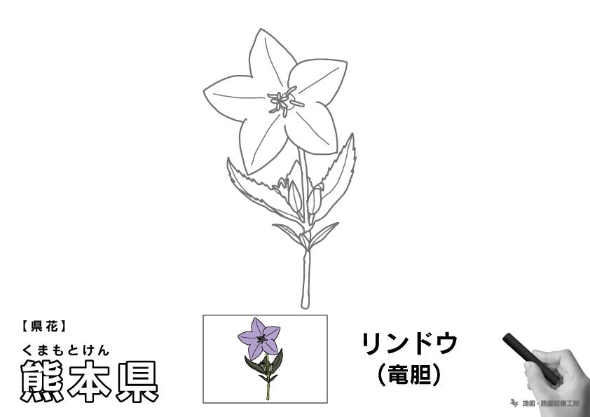 県花 熊本県 リンドウ(竜胆)のイラスト・ぬりえ