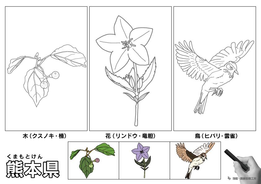 熊本県 県木 県花 県鳥 のイラスト・ぬりえ