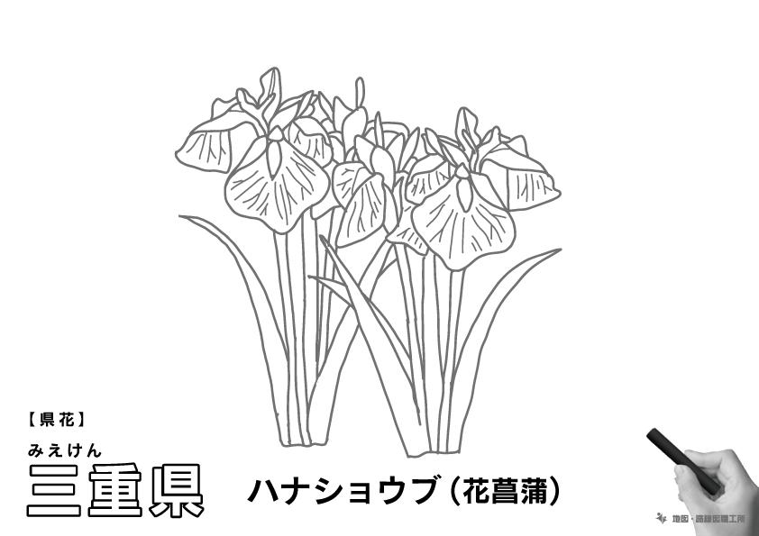 県花 三重県 ハナショウブ(花菖蒲)のイラスト・ぬりえ