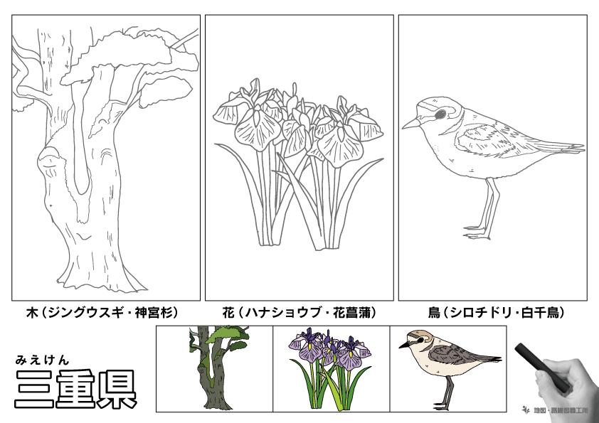 三重県 県木 県花 県鳥 のイラスト・ぬりえ