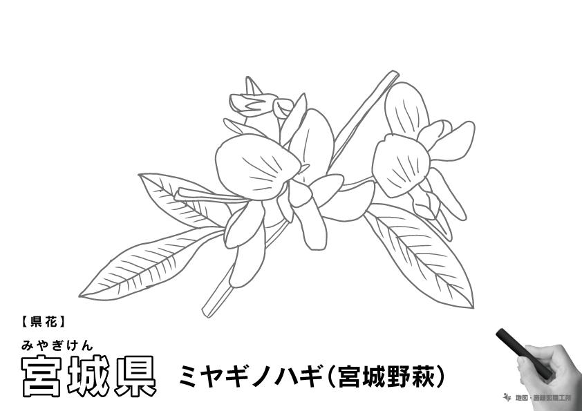 県花 宮城県 ミヤギノハギ(宮城野萩)のイラスト・ぬりえ